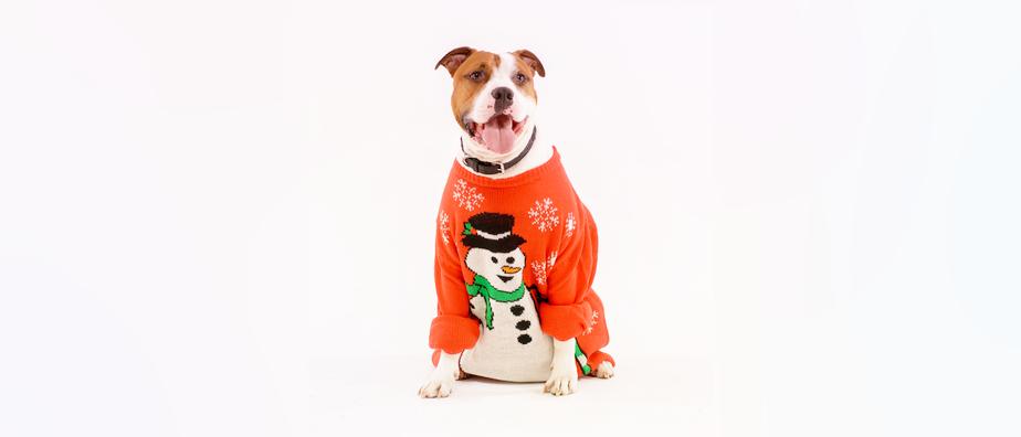 Le «pull moche de Noël» : retour sur un succès inattendu